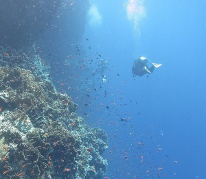 Red Sea Reef Diving
